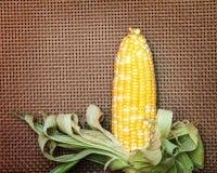 两甜玉米口气在棕色柳条制品背景的 免版税库存照片