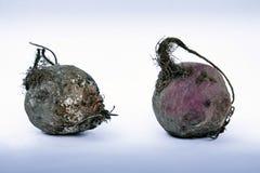 两甜菜根:腐烂和新鲜在被隔绝的白色背景 免版税图库摄影