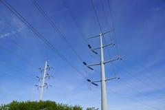 两种金属在树上的输电线波兰人 库存照片