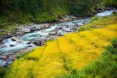 两种颜色稻田在安纳布尔纳峰保护区域,尼泊尔 免版税库存图片
