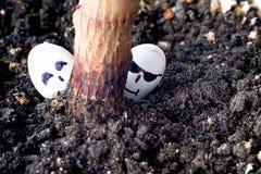 两粒南瓜籽看从植物、玻璃和微笑的词根的后面 库存图片