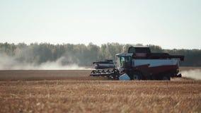 两结合收割在金黄领域的收获麦子 股票视频