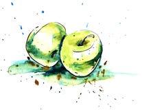 两绿色苹果手拉的真正的水彩和墨水剪影  皇族释放例证