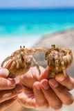 两美丽的大寄居蟹在手中 图库摄影