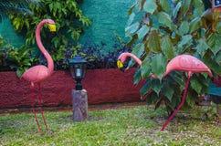 两群桃红色火鸟在其中一个加勒比庭院,可爱的庭院装饰中 库存图片