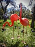 两群火鸟在夏天动物园里 库存照片