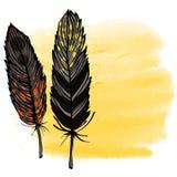 两羽毛 免版税图库摄影