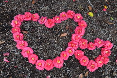 两花做的心脏形状,大和小 库存照片