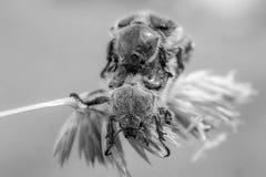 两草的小甲虫伙伴 免版税库存图片