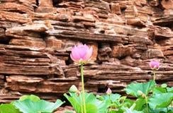两莲花和叶子与一只蜂在夏天 免版税库存照片