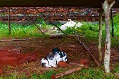 两被放弃的狗 库存图片