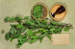 两足动物 干燥工厂 草药, phytotherapy医药草本 库存照片