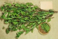 两足动物 干燥植物用于替代医学, phytotherapy 库存照片