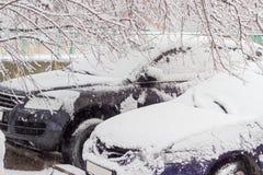 两辆汽车的前面部分在树枝下的在降雪期间 图库摄影