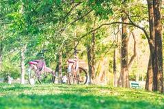两辆自行车停放在树下 库存照片