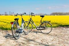 两辆自行车在daffofil充满活力的黄色开花的领域附近停放了 免版税图库摄影