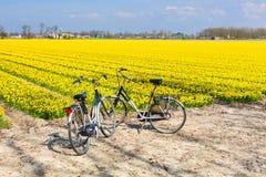两辆自行车在daffofil充满活力的黄色开花的领域附近停放了 库存图片