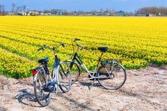 两辆自行车在daffofil充满活力的黄色开花的领域附近停放了 免版税库存图片