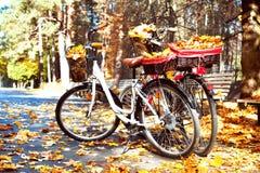 两辆走的自行车在有黄色树的秋天公园在b离开 免版税库存照片