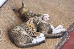 两逗人喜爱的小小猫 免版税库存图片