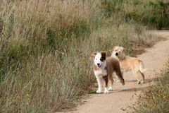 两逗人喜爱,等待在道路的愉快的狗 库存图片