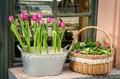 两郁金香和紫罗兰花束在站立在窗口的一个柳条筐和铁水池在窗口基石在Lvi街道上  图库摄影
