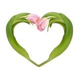从两郁金香的心脏 10 eps 免版税库存图片