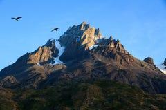 两长腿兀鹰现出轮廓反对在一座岩石花岗岩山,托里斯del潘恩国家公园的蓝天 免版税库存照片