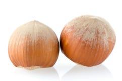 两颗榛子 免版税库存图片