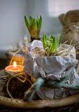 两风信花在包装纸和一个蜡烛户内 库存照片