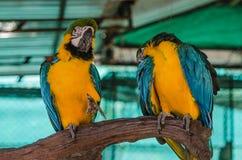 两鹦鹉在动物园的一个分支被栖息 免版税库存照片