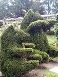 两头修剪的花园熊 库存照片