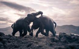 两头大象公牛互动并且沟通,当戏剧战斗时 库存照片