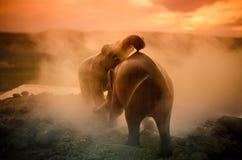 两头大象公牛互动并且沟通,当戏剧战斗时 免版税库存图片