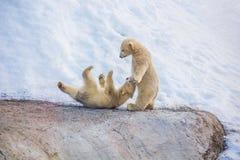 两头小的熊 免版税库存图片