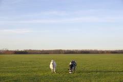 两头母牛在开拓地purmer草甸在purmerend附近的在amst北部 库存图片
