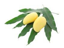 两黄色芒果和被隔绝的堆叶子 库存照片