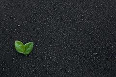 两说谎在湿黑背景的叶子 免版税库存图片