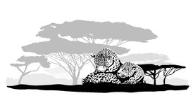 两头豹子 免版税库存照片