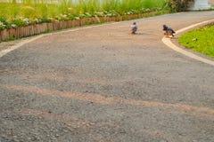 两birdsgray作为夫妇的鸽子活togethere 免版税库存照片