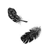 两featers剪影 免版税库存照片