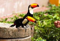 两Toucans (Ramphastinae)在句容飞禽公园在新加坡 免版税图库摄影