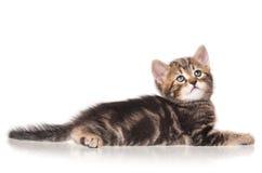 严肃的小的小猫 库存图片