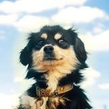 严肃的沮丧的画象与人的emotionson的天空蔚蓝背景 家养的宠物,动物 库存照片