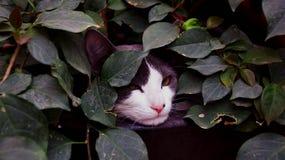 严肃的猫在原野 免版税图库摄影
