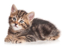 严肃的逗人喜爱的小猫 免版税库存照片