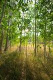 严重的森林照明设备场面 库存照片