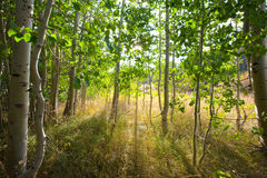 严重的森林照明设备场面 免版税库存图片