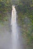 严重的森林自然雨高瀑布 库存照片