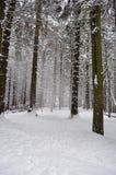 严重的横向冬天 库存图片